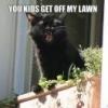 droidcat